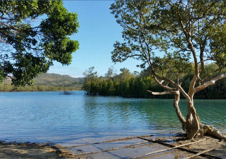 mangroves2